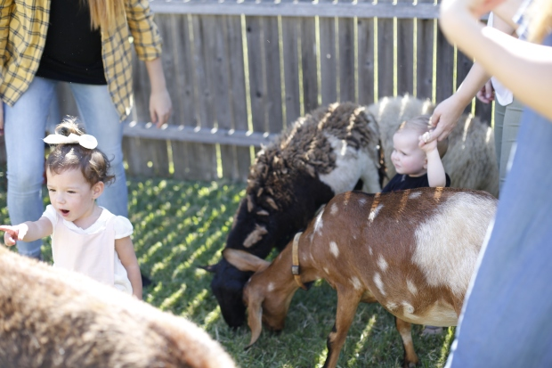 It's a Barnyard Bash! Finnley Haven Turns Two! https://rachelaz.com/ Country Chic, Modern Petting Zoo Birthday Party.